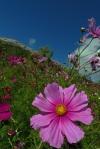 Ceuse Flower